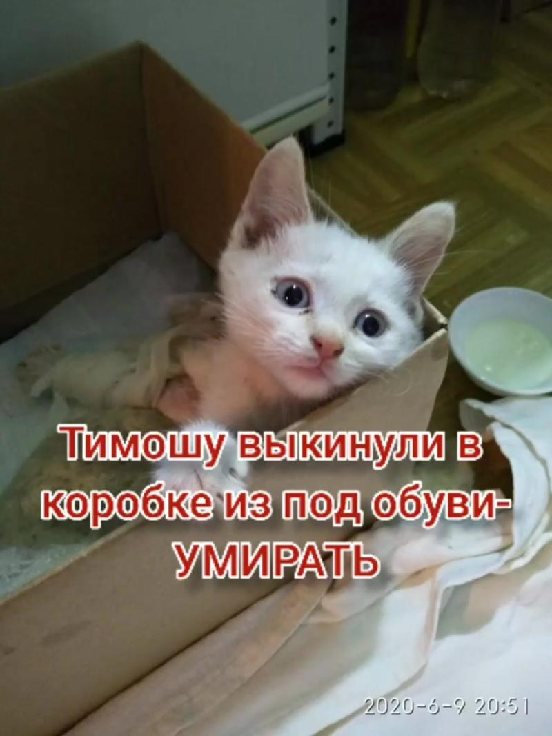 InShot_20200818_170021065.mp4