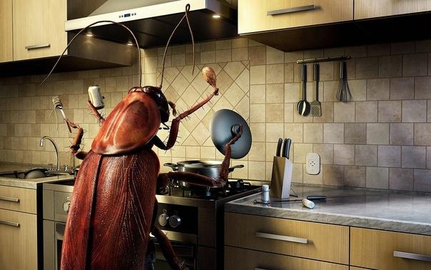 Усатый гость Никита Сергеевич был самым известным тараканом в общежитии. Имя он получил за свою непреодолимую любовь к консервированной кукурузе. В ней он был зачат, в ней родился, в ней и