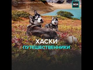 Океан, вулкан и хаски — Москва 24