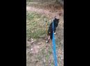 Видео от Ольги Кузьмичевой