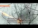 В Китае дрон с огнеметом уничтожает осиные гнезда