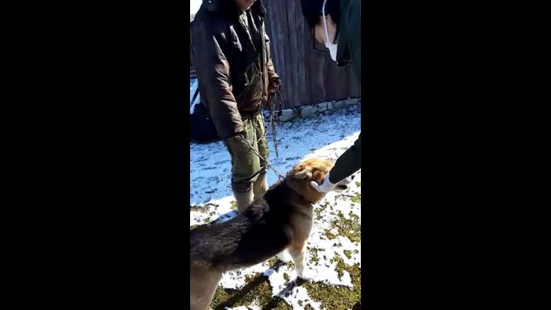 Видео от Юлии Островской