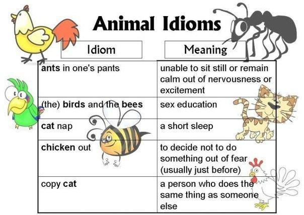 Подборка идиом с английскими зверушками