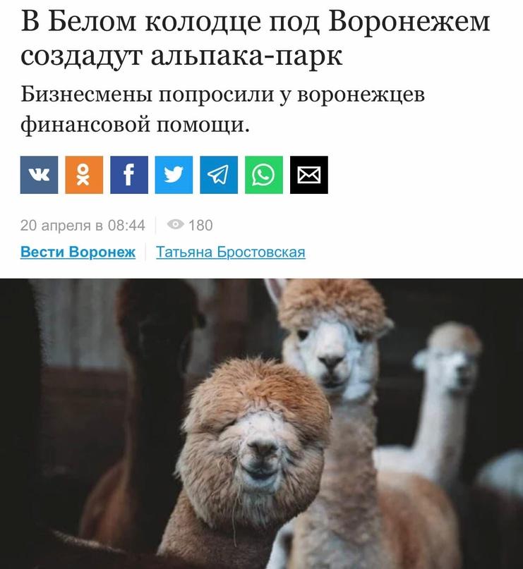 Первый в Воронеже альпака-парк планируют открыть в июне 2021 года. Его уже начал...