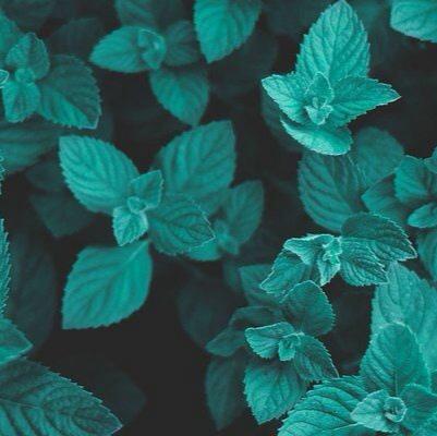 что вызывают запахи?, изображение №3