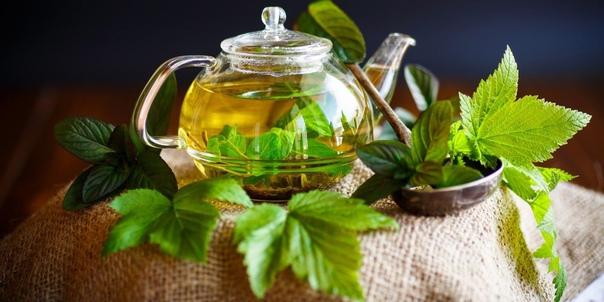 Зачем пить чай из листьев смородины