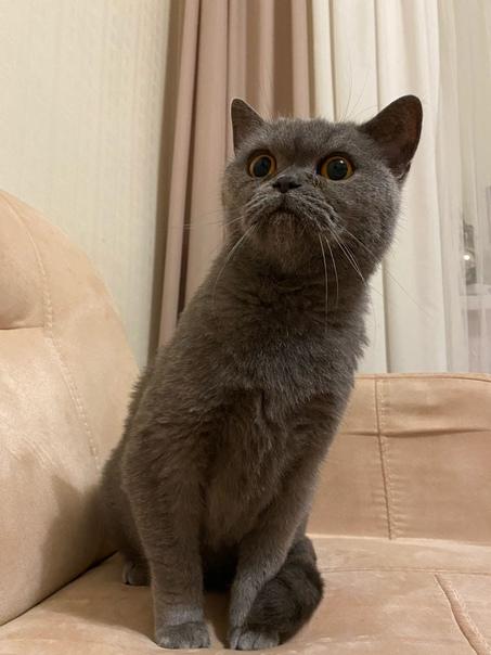 ‼пропала кошка‼ зовут Туся, ей 9ый год, без передних когтей. домашняя, улицы боится, но прошло уже... Иваново