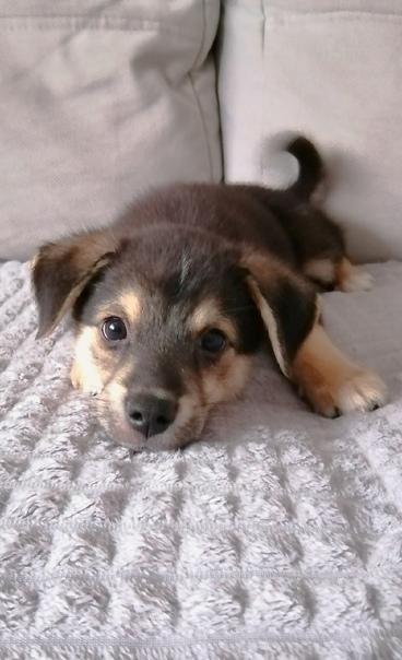 〽️〽️Ищет дом щенок (от маленькой собаки) по кличке...