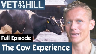Ветеринар на холме: Поиск беременной коровы (2 сезон 11 серия) / Dr Scott Digs 'Deep' To Find A Pregnant Cow   S02E11   Vet On The Hill