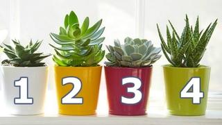 5 самых легких в уходе комнатных растений   Я знаю