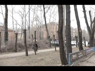 Варварски спилили деревья в центре Абакана - Абакан 24