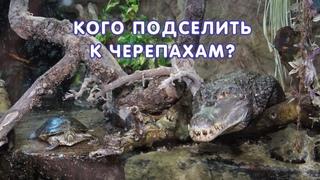 Кого подселить к черепахам? Крокодила? Игуану? Рыбок?