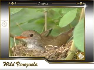 Wild Venezuela 02 / Дикая природа Венесуэлы 2-я серия.Гнездование птиц