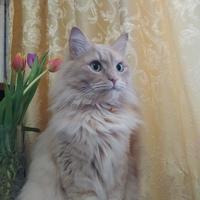 Фотография профиля Вани Крашкина ВКонтакте