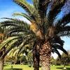 Работа  и отдых в Израиле