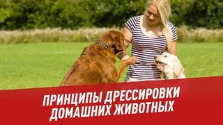 Принципы дрессировки домашних животных - Хочу всё знать