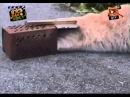 Смішні приколи про тварин Вусо-лапо-хвіст 15