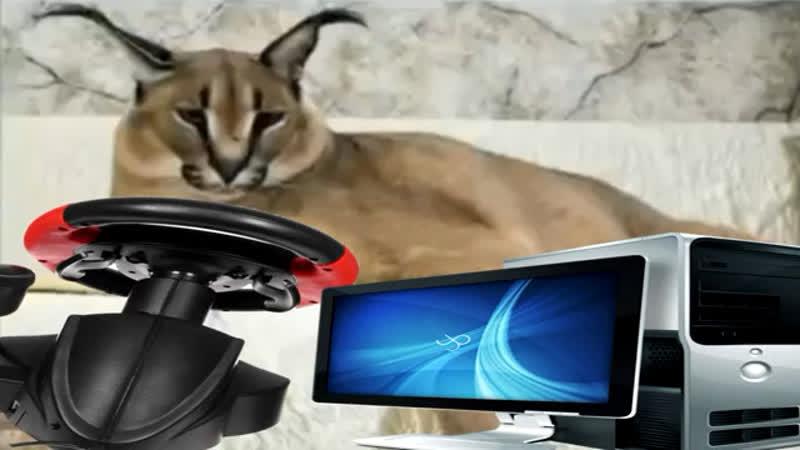 Большая шлёпа рекламирует эльдорадо 2 ядра 2 гига игровая видеокарта