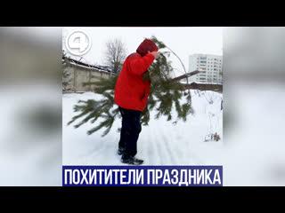 Воруют елки в центре города