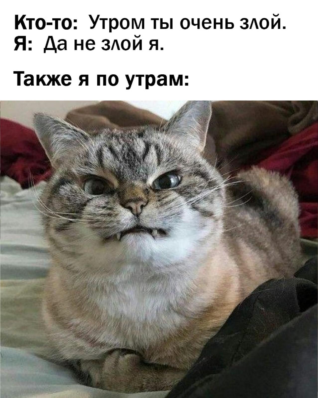 Доброе утро, #Волжский ✌️