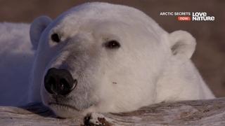 Тайны Арктики. Ожидание зимы. Док фильм о дикой природе.